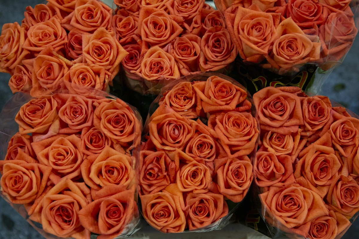 New Covent Garden Flower Market September 2019 A Florists Guide To Orange And Peach Roses Rona Wheeldon Flowerona Naranja Roses At Zest Flowers