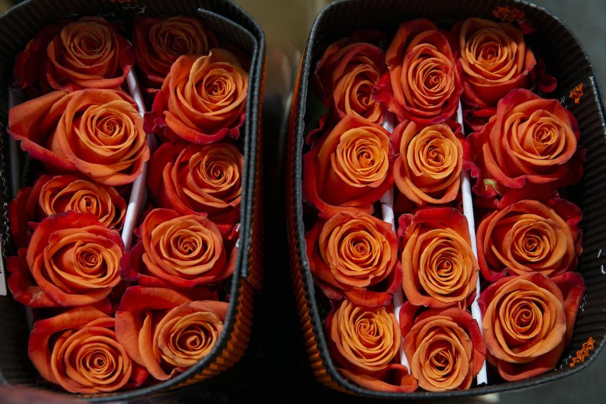 New Covent Garden Flower Market September 2019 A Florists Guide To Orange And Peach Roses Rona Wheeldon Flowerona Orange Crush Roses At Dennis Edwards Flowers