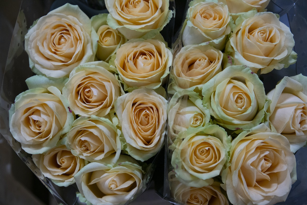 New Covent Garden Flower Market September 2019 A Florists Guide To Orange And Peach Roses Rona Wheeldon Flowerona Peach Avalanche Roses At Dennis Edwards Flowers