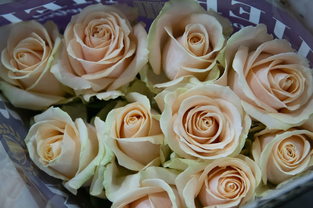 New Covent Garden Flower Market September 2019 A Florists Guide To Orange And Peach Roses Rona Wheeldon Flowerona Pearl Avalanche Roses At Dg Wholesale Flowers