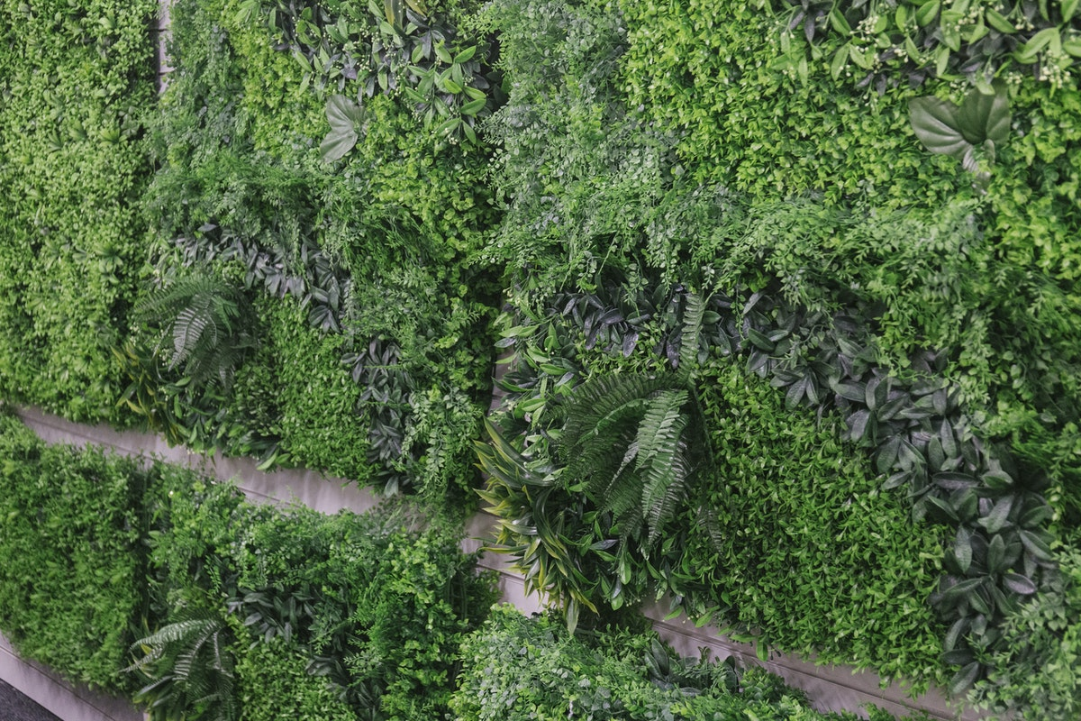 New Covent Garden Flower Market September 2019 In Season Report Rona Wheeldon Flowerona Artificial Green Wall At Whittingtons