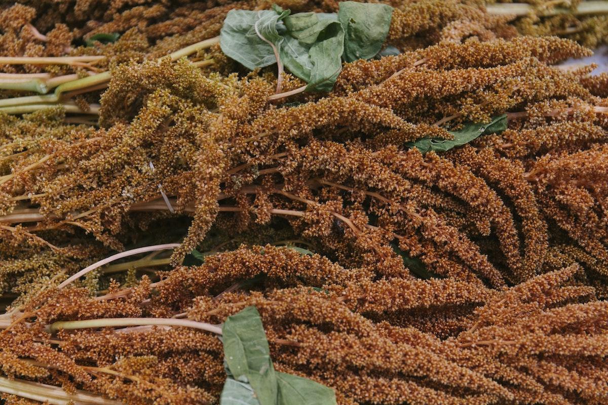 New Covent Garden Flower Market September 2019 In Season Report Rona Wheeldon Flowerona British Bronze Amaranthus At Pratley