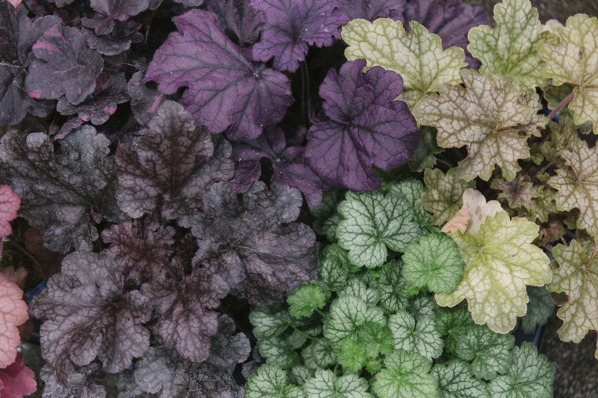 New Covent Garden Flower Market September 2019 In Season Report Rona Wheeldon Flowerona British Heuchera Plants At L Mills