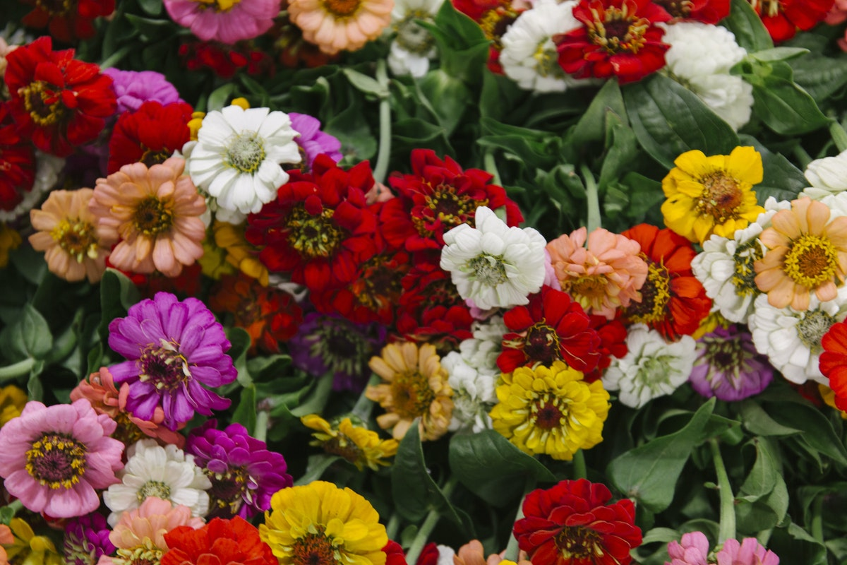 New Covent Garden Flower Market September 2019 In Season Report Rona Wheeldon Flowerona British Zinnias At Pratley