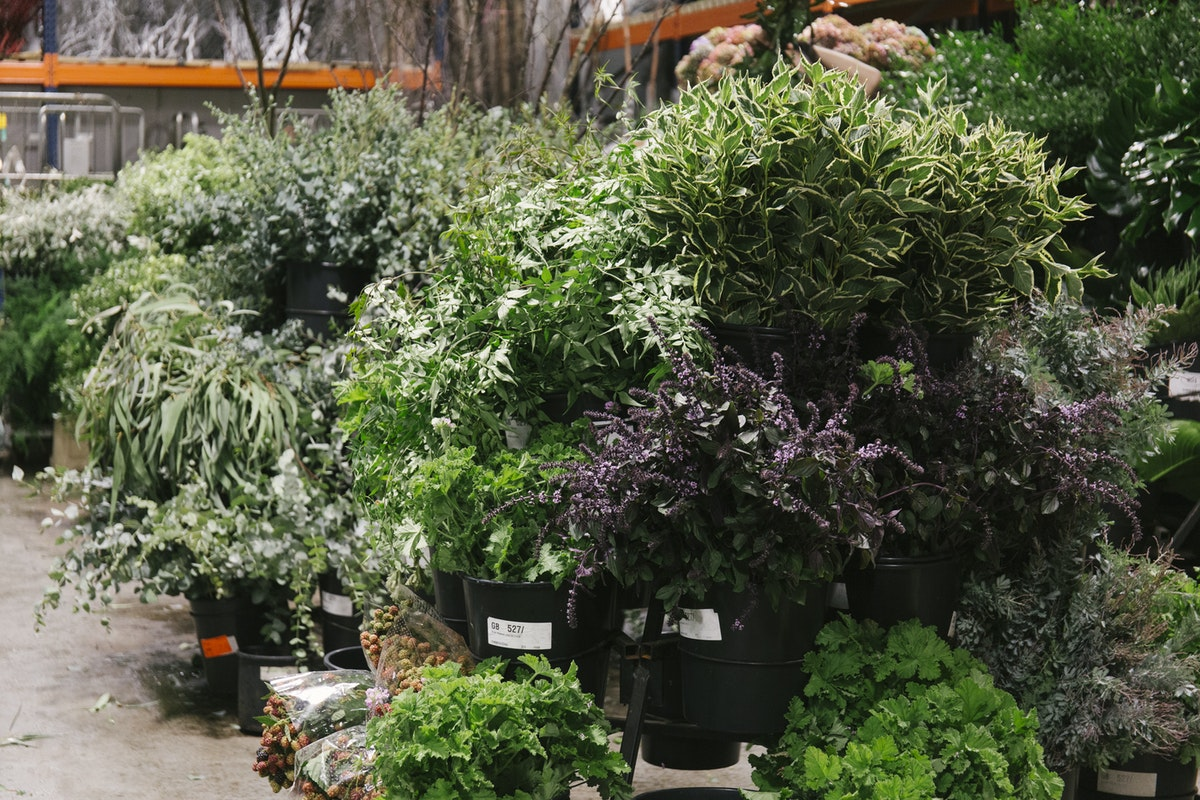 New Covent Garden Flower Market September 2019 In Season Report Rona Wheeldon Flowerona Foliage Display At Porters Foliage