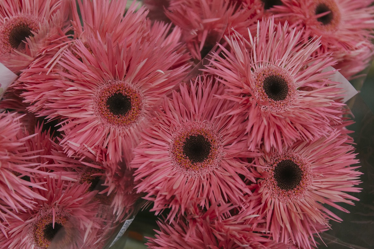 New Covent Garden Flower Market September 2019 In Season Report Rona Wheeldon Flowerona Gerbera Pink Springs At The Floral Garden Group