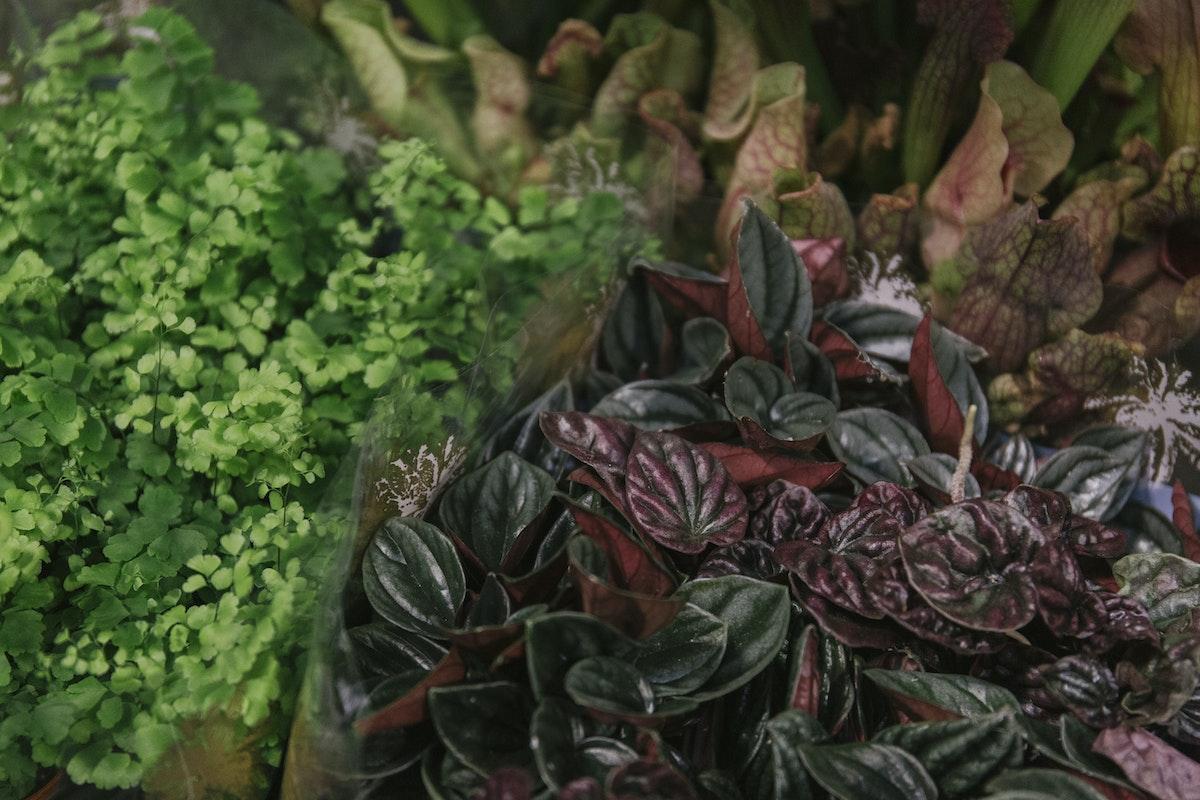 New Covent Garden Flower Market September 2019 In Season Report Rona Wheeldon Flowerona Mini Plants For Terrariums At Arnott Mason