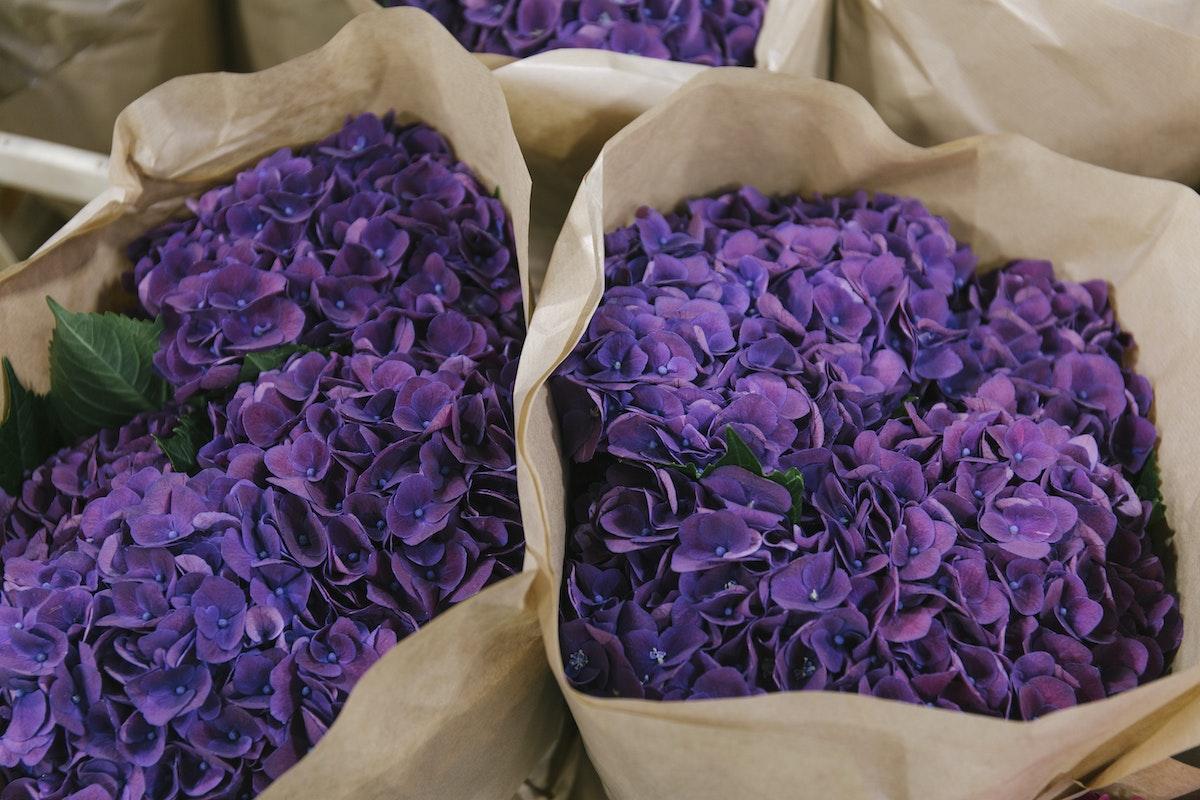 New Covent Garden Flower Market September 2019 In Season Report Rona Wheeldon Flowerona Mon Amour Aubergine Hydrangeas At Dg Wholesale Flowers