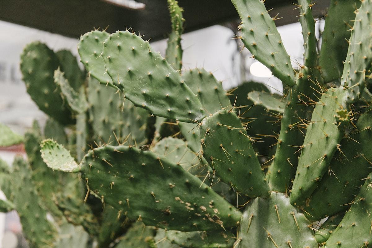 New Covent Garden Flower Market September 2019 In Season Report Rona Wheeldon Flowerona Opuntia Plants At Quality Plants