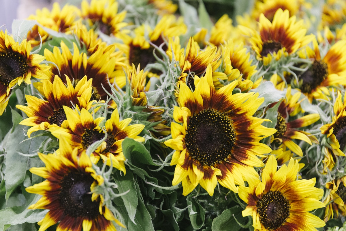 New Covent Garden Flower Market September 2019 In Season Report Rona Wheeldon Flowerona Sunflowers At Bloomfield