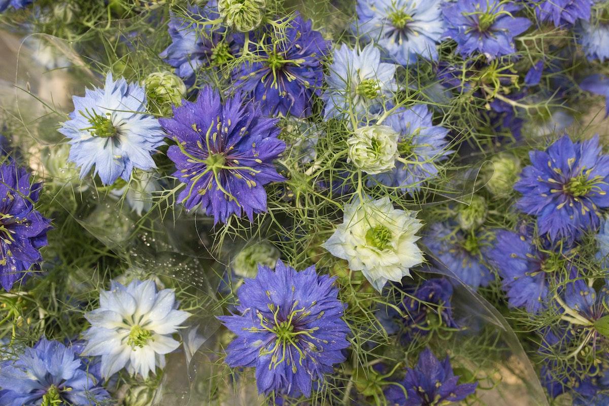 New Covent Garden Flower Market Product Profile Report Nigella June 2017 Rona Wheeldon Flowerona Nigella Damascena At Deanos