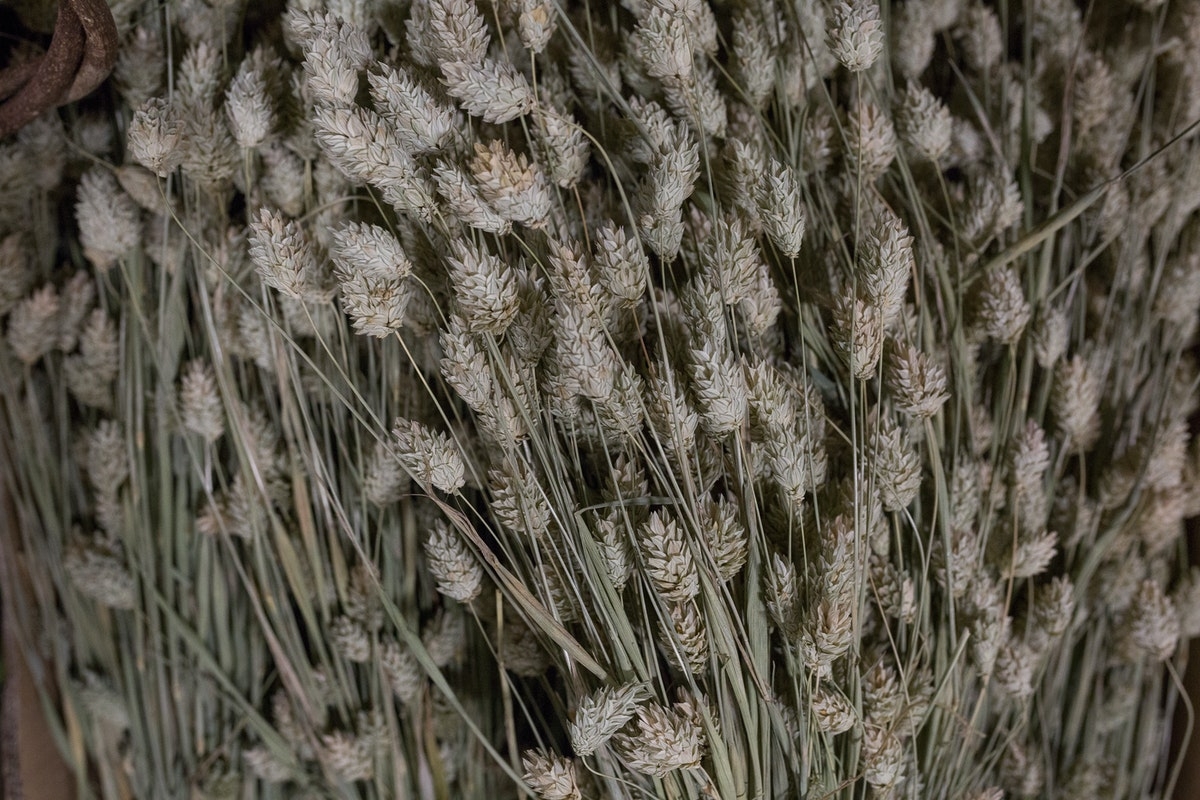 New Covent Garden Flower Market Product Profile Report August 2017 Grasses Rona Wheeldon Flowerona Phalaris At Porters Foliage