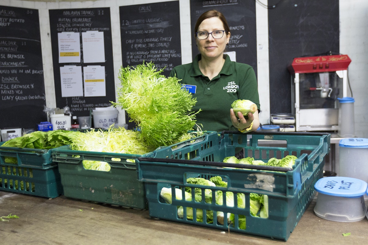 Fruit And Veg Customer Profile May 2017 London Zoo Hannah Duprey