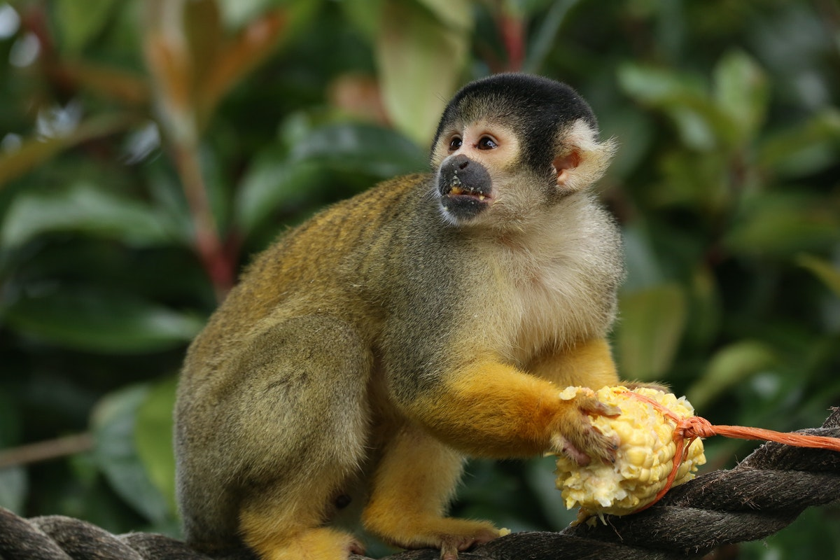 Fruit And Veg Customer Profile May 2017 London Zoo Monkey