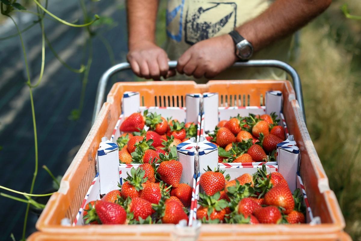Fruit And Veg Grower Profile June 2017 Hugh Lowe Full Trolley