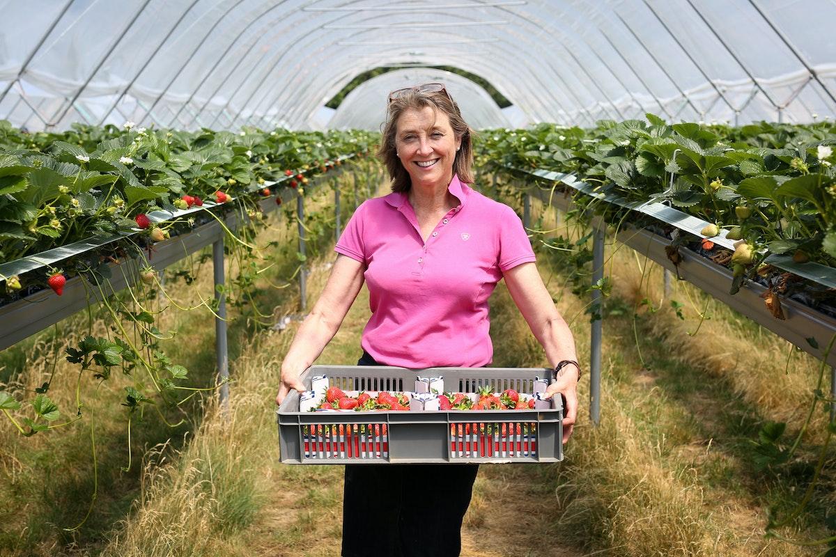 Fruit And Veg Grower Profile June 2017 Hugh Lowe Marion Regan Holding Tray