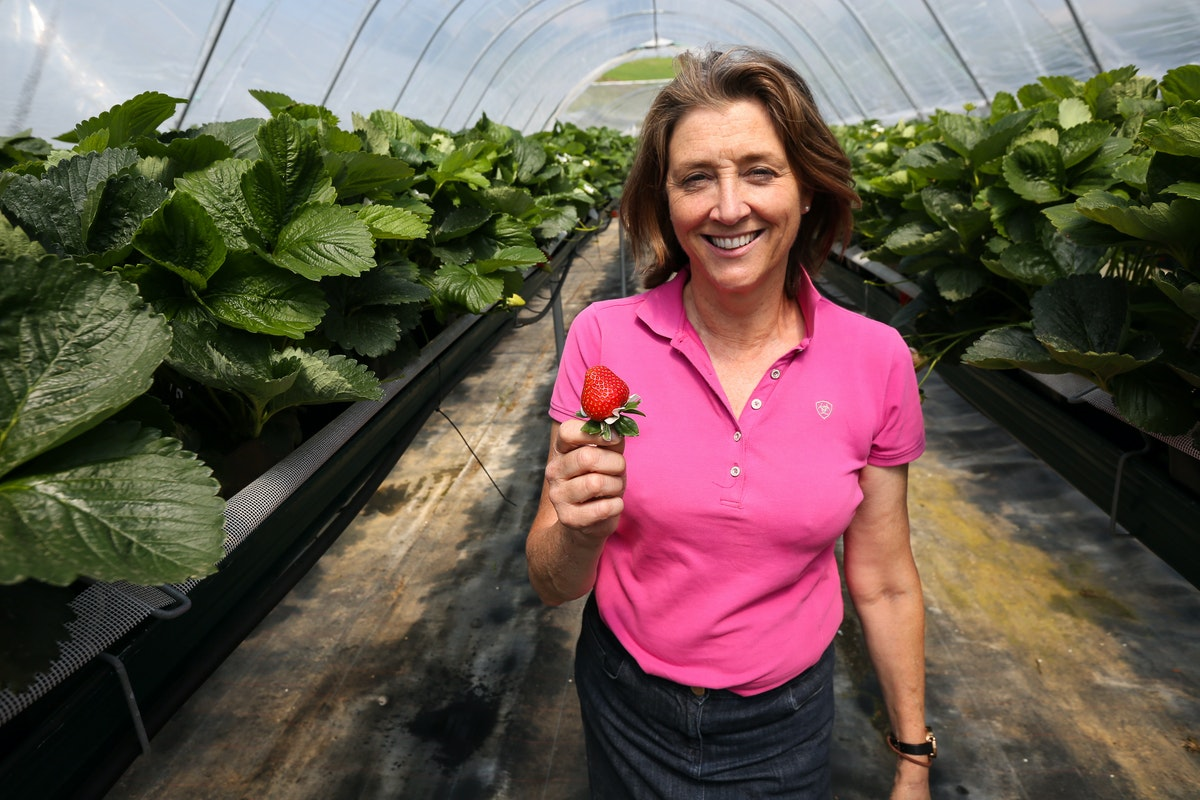 Fruit And Veg Grower Profile June 2017 Hugh Lowe Marion Regan