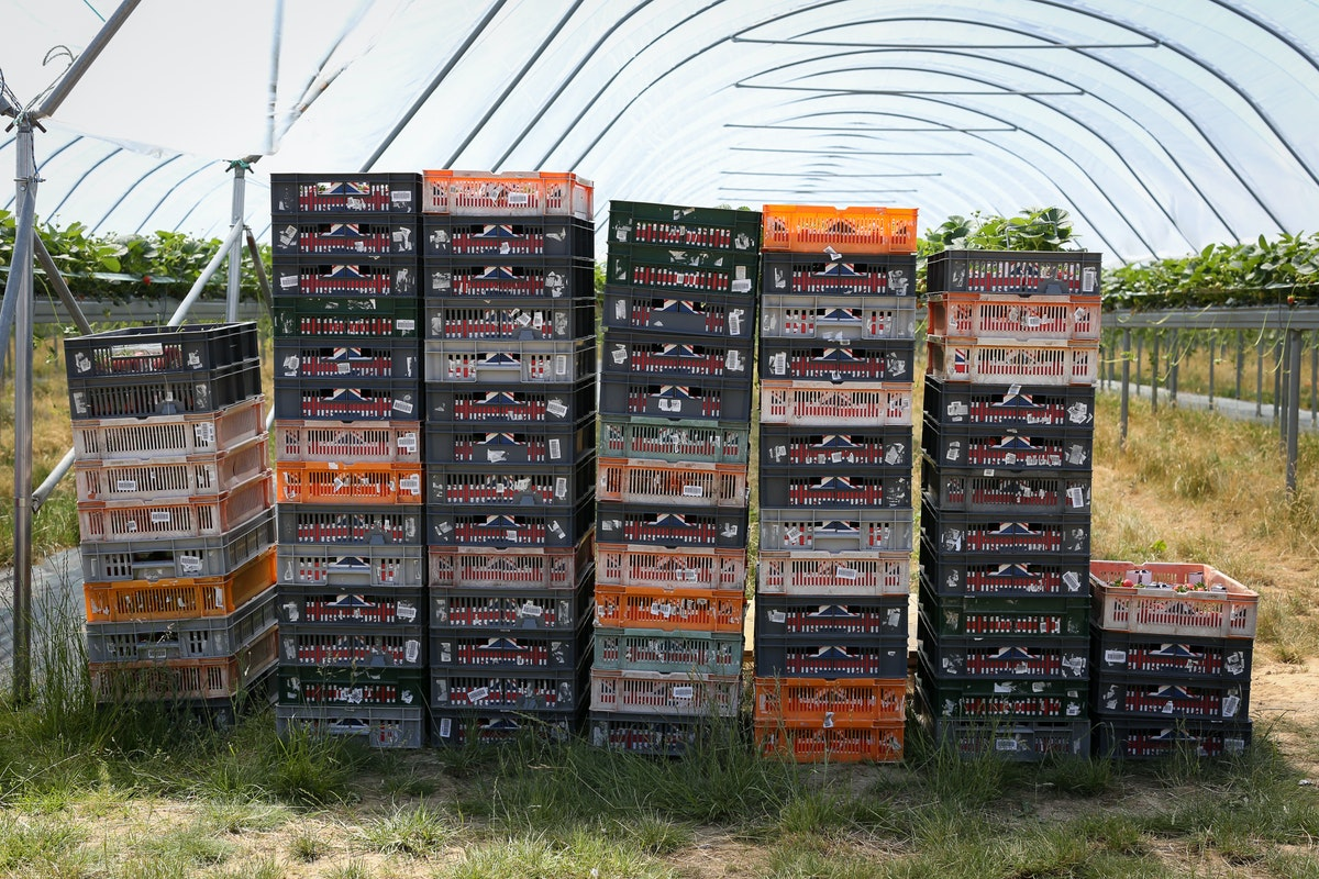 Fruit And Veg Grower Profile June 2017 Hugh Lowe Pile Boxes
