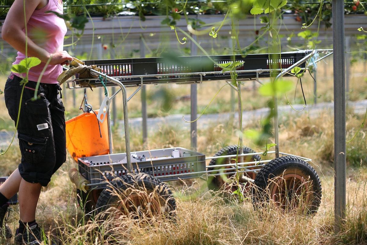 Fruit And Veg Grower Profile June 2017 Hugh Lowe Trolley