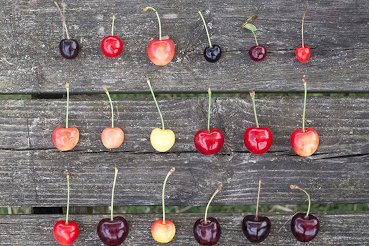 Fruit And Veg Product Profile July 2017 English Cherries Selection 0