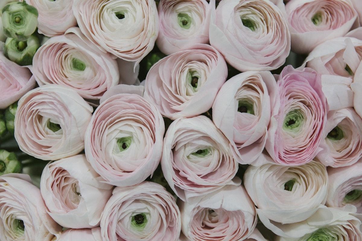 Ranunculus New Covent Garden Flower Market Rona Wheeldon Flowerona 1