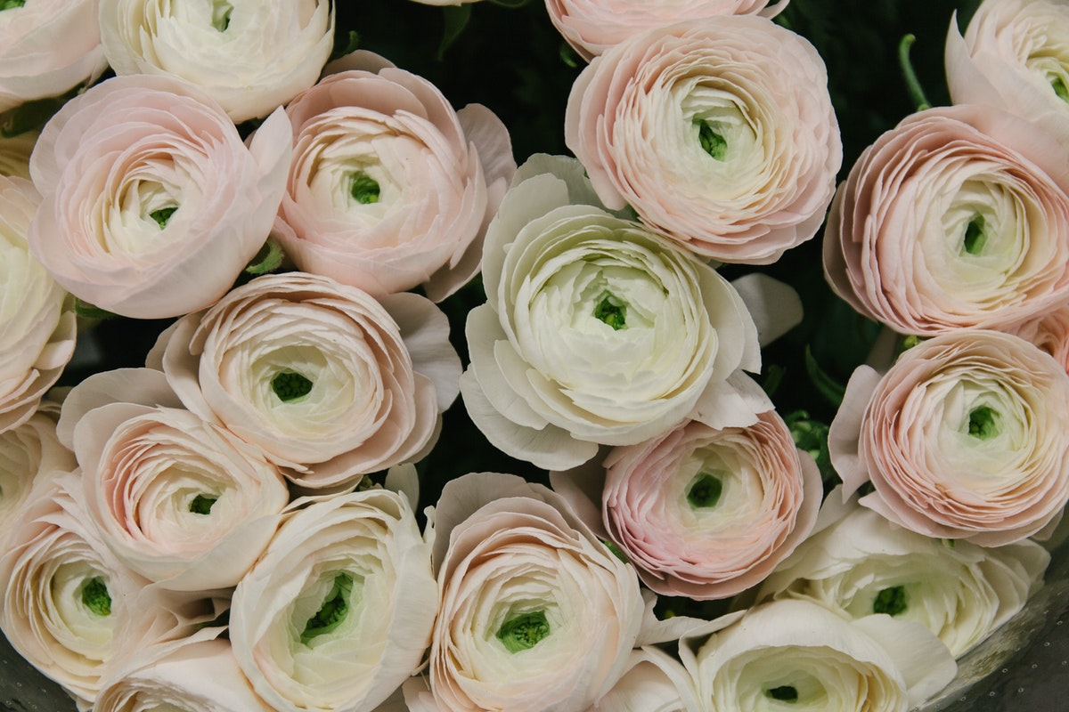 The Hottest Flowers Foliage Plants Sundries Trends For 2018 Rona Wheeldon Flowerona New Covent Garden Flower Market Cloni Ranunculus At Dg Wholesale Flowers