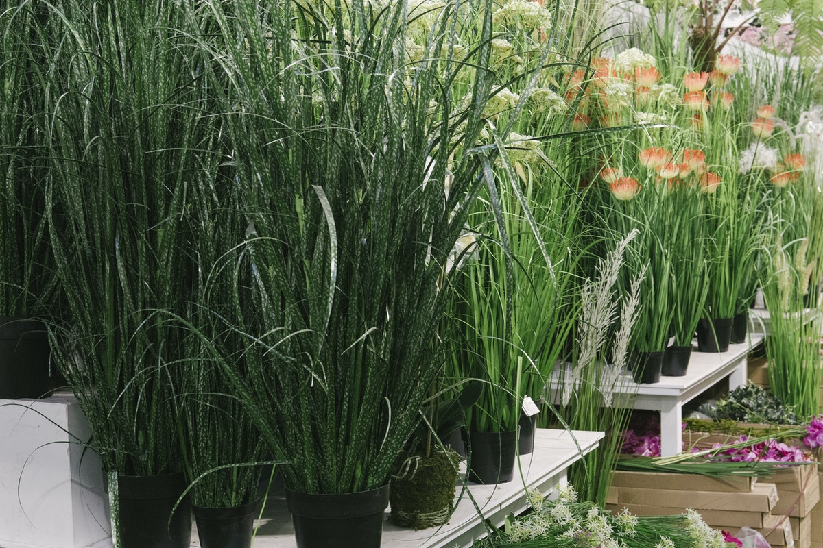 The Hottest Flowers Foliage Plants Sundries Trends For 2019 Rona Wheeldon Flowerona New Covent Garden Flower Market Artificial Greenery And Plants At C Best