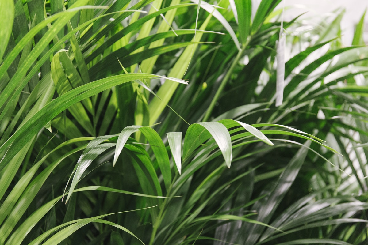 The Hottest Flowers Foliage Plants Sundries Trends For 2019 Rona Wheeldon Flowerona New Covent Garden Flower Market Kentia Palm Plants At Quality Plants