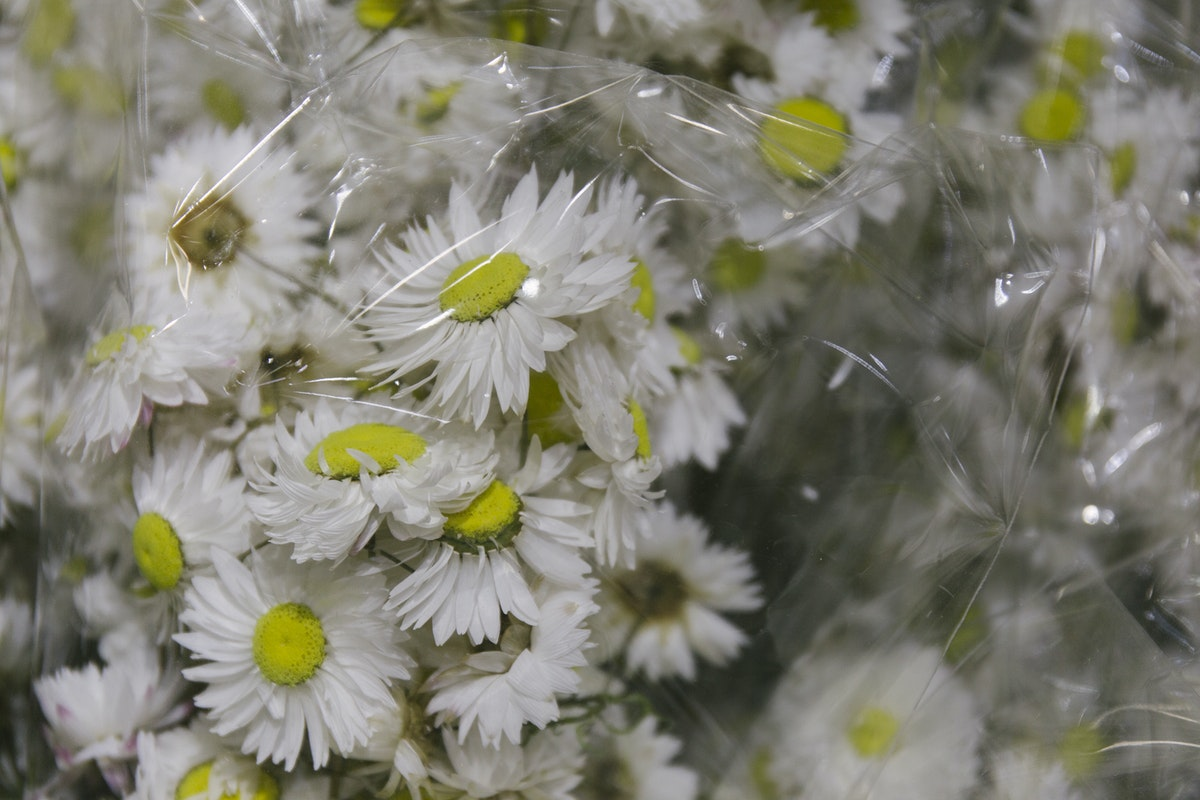 The Hottest Flowers Foliage Plants Sundries Trends For 2019 Rona Wheeldon Flowerona New Covent Garden Flower Market White Rodanthe Dried Flowers At Porters Foliage
