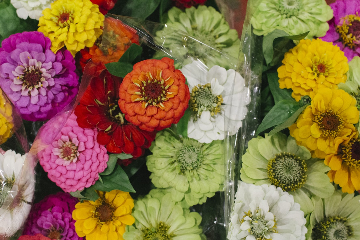The Hottest Flowers Foliage Plants Sundries Trends For 2019 Rona Wheeldon Flowerona New Covent Garden Flower Market Zinnias