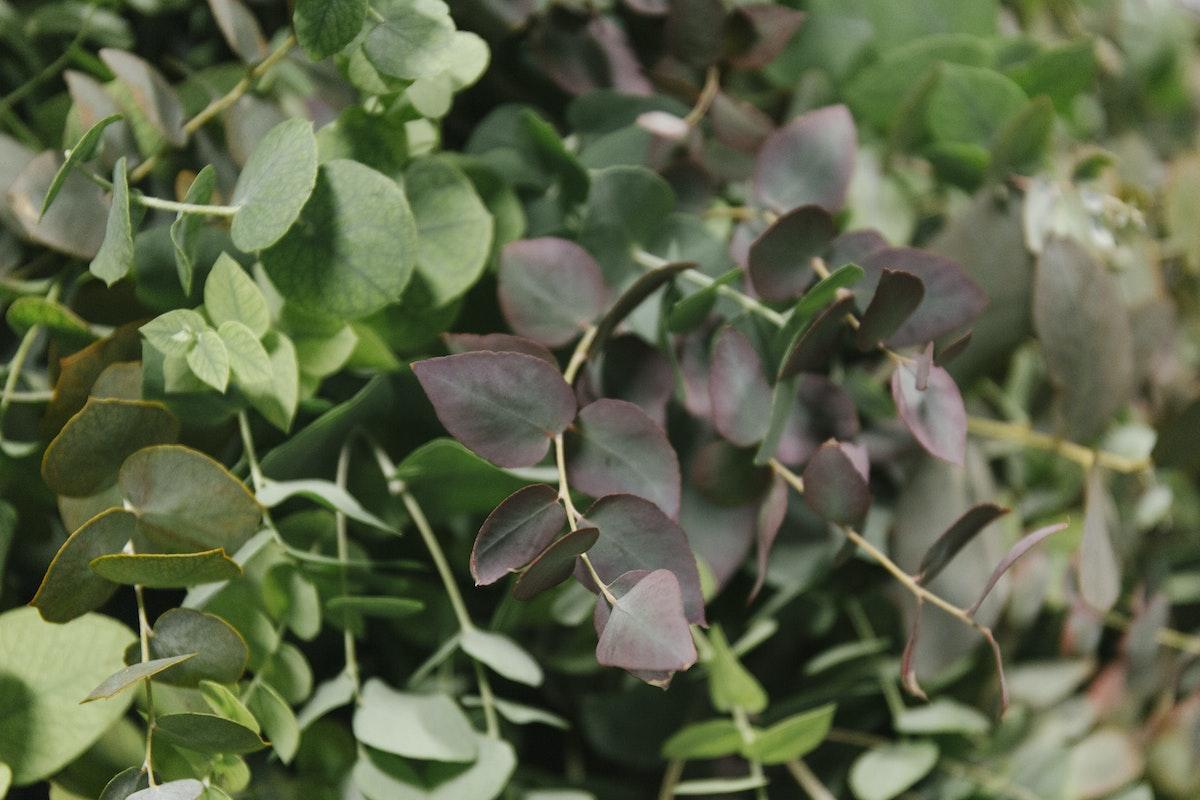 The Hottest Flowers Foliage Plants Sundries Trends For 2019 Rona Wheeldon Flowerona New Covent Garden Flower Market Autumnal Eucalyptus At Porters Foliage