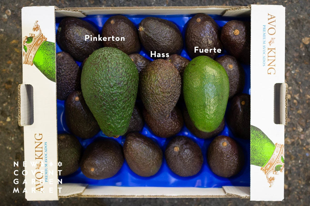 Fruit And Veg Market Chefs Guide To Avocadoes Varieties
