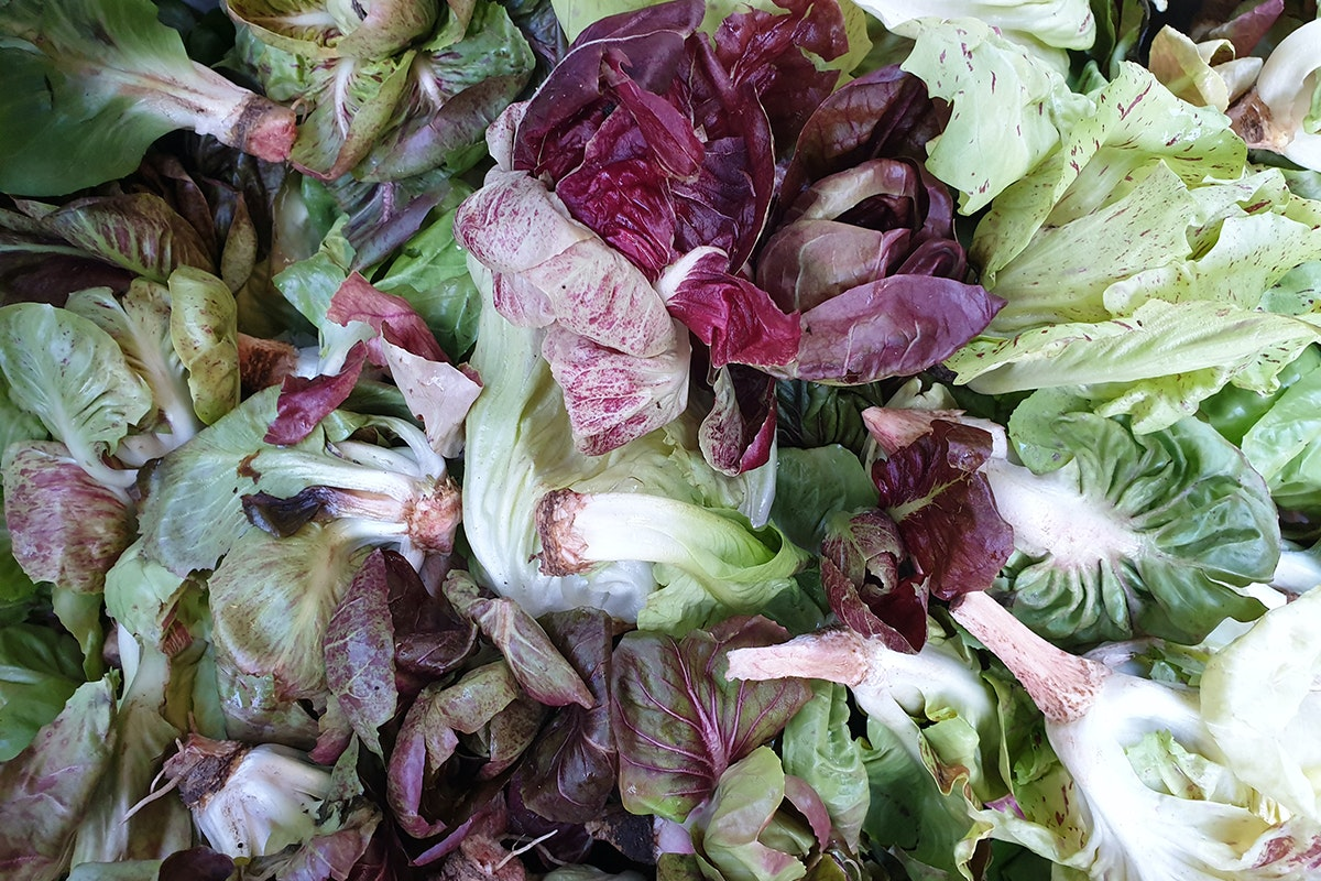 Fruit And Veg Market Chefs Guide To Radicchio Grumolo