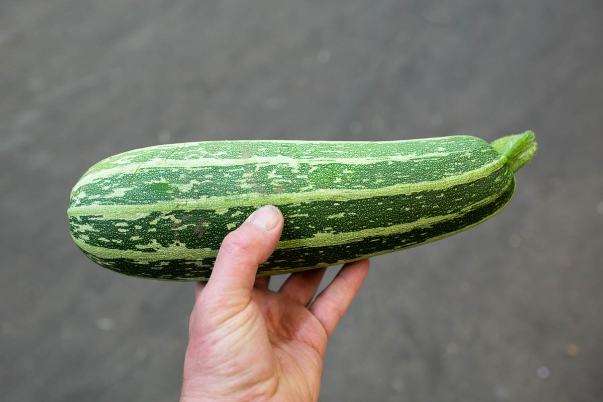 Fruit And Veg Market July 2019 Marrow