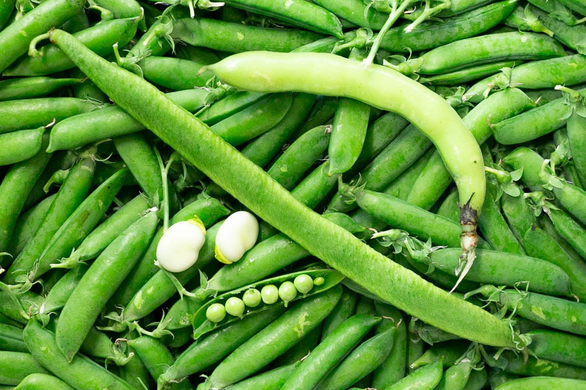 Fruit And Veg Market July 2019 Runners Peas Broad Beans