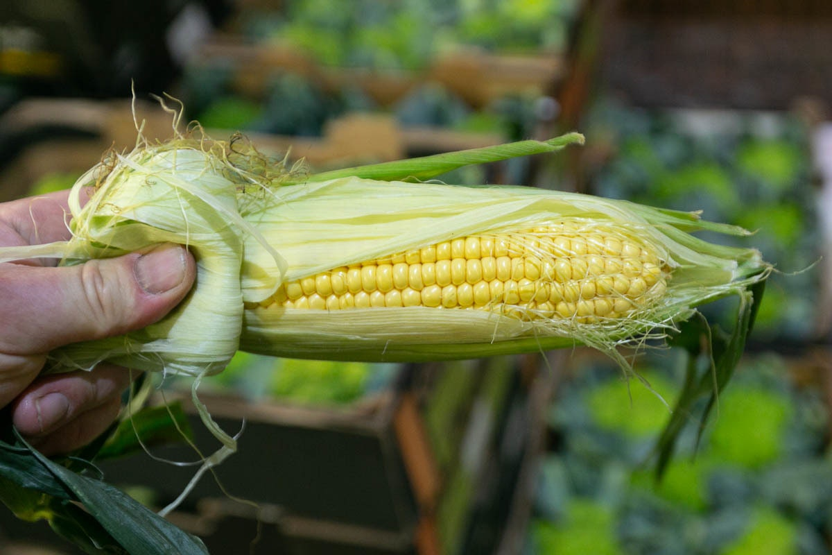 Fruit And Veg Market Report August 2019 Sweetcorn
