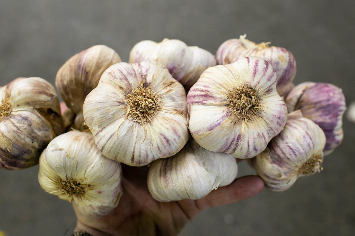 Fruit And Veg Market Report December 2019 Purple Garlic