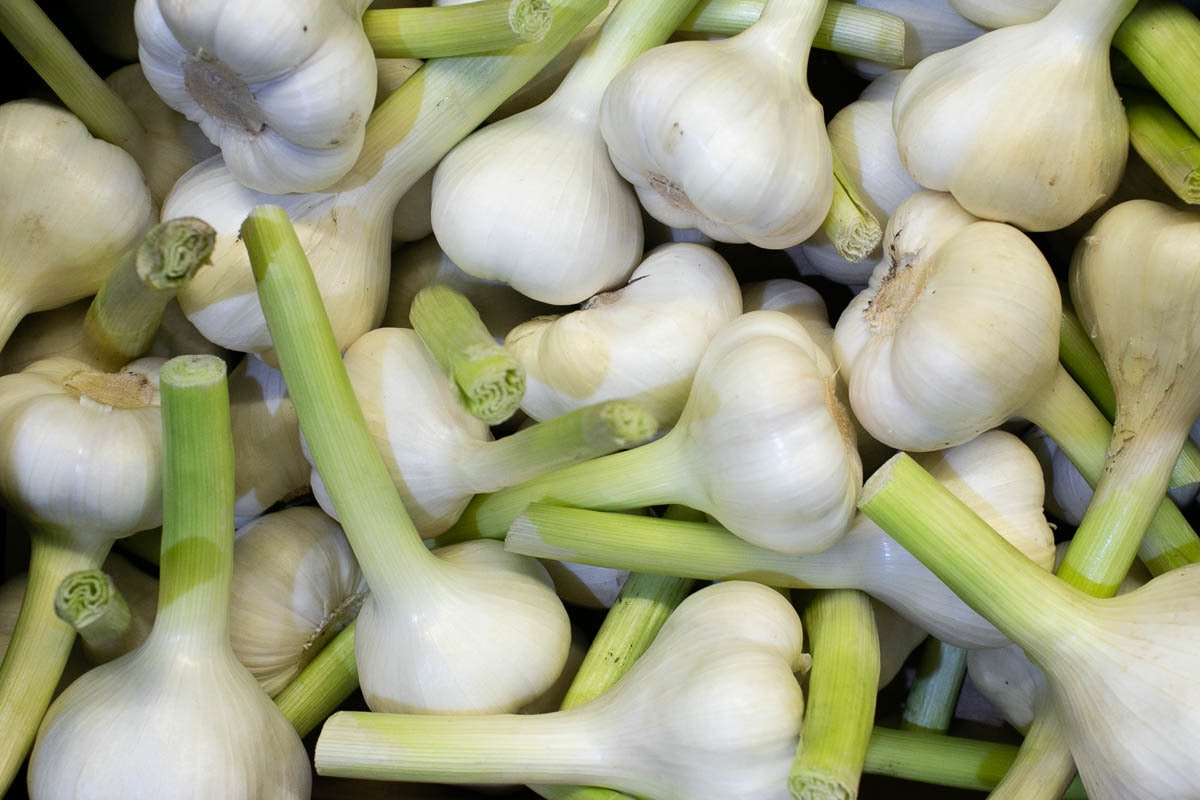 Fruit And Veg Market Report December 2019 Wet Garlic