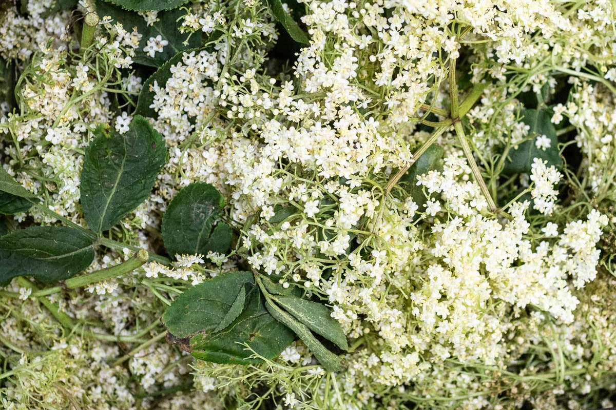 Fruit And Veg Market Report June 2019 Elderflower