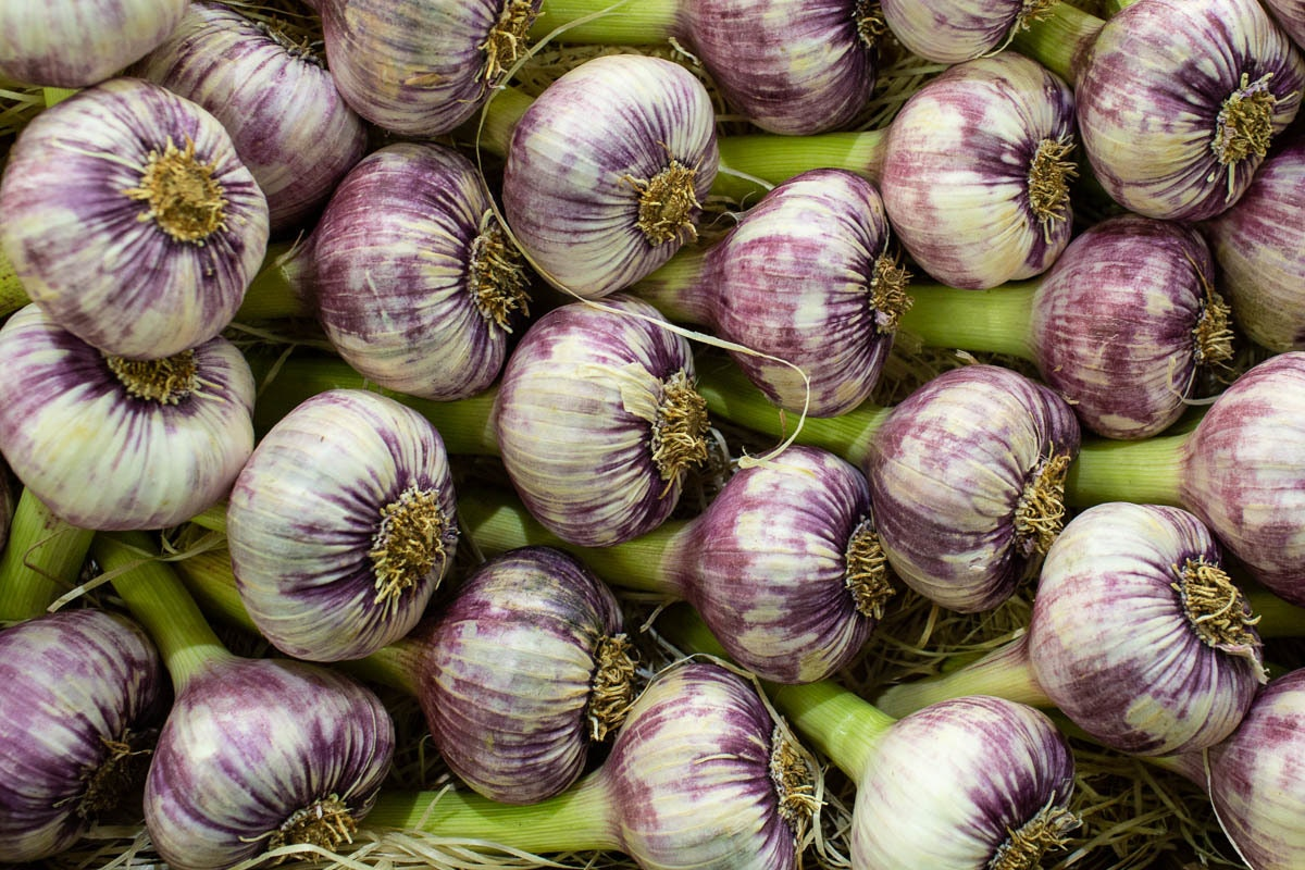 Fruit And Veg Market Report June 2019 Purple Garlic