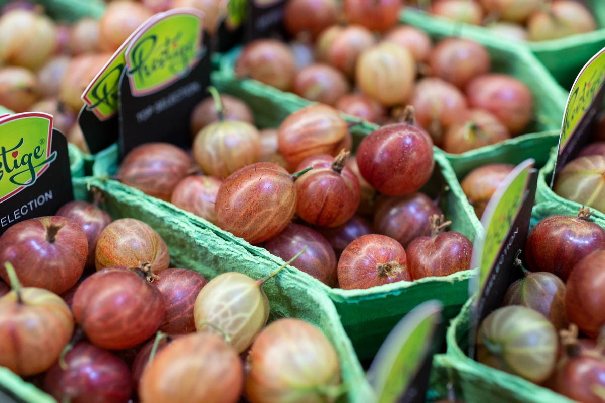 Fruit And Veg Market Report June 2019 Red Gooseberries