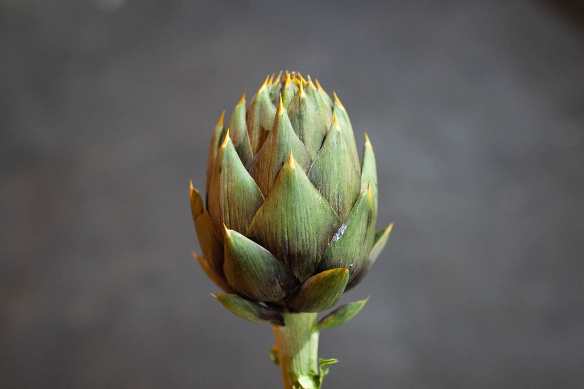 Fruit And Veg Market Report June 2019 Spiny Artichoke