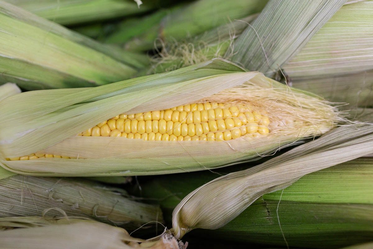 Fruit And Veg Market Report June 2019 Sweetcorn