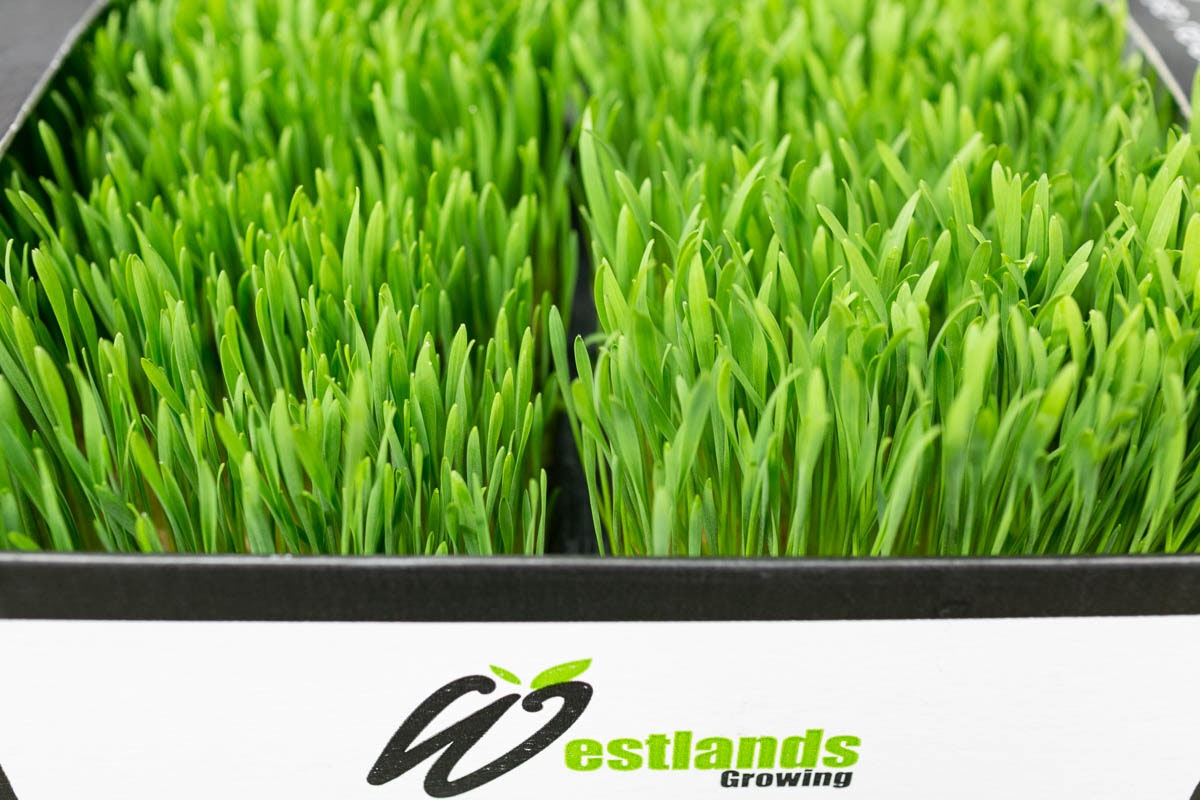 Fruit And Veg Market Report November 2019 Wheatgrass