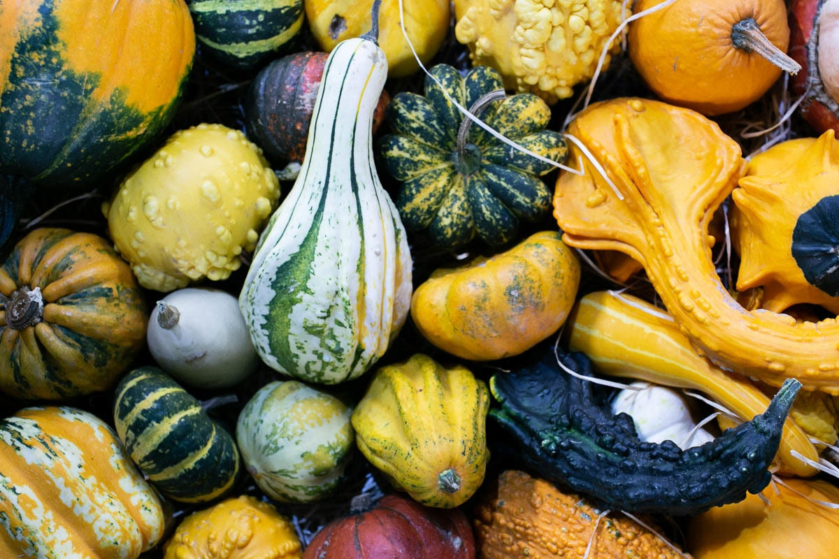 Fruit And Veg Market Report October 2019 Gourds