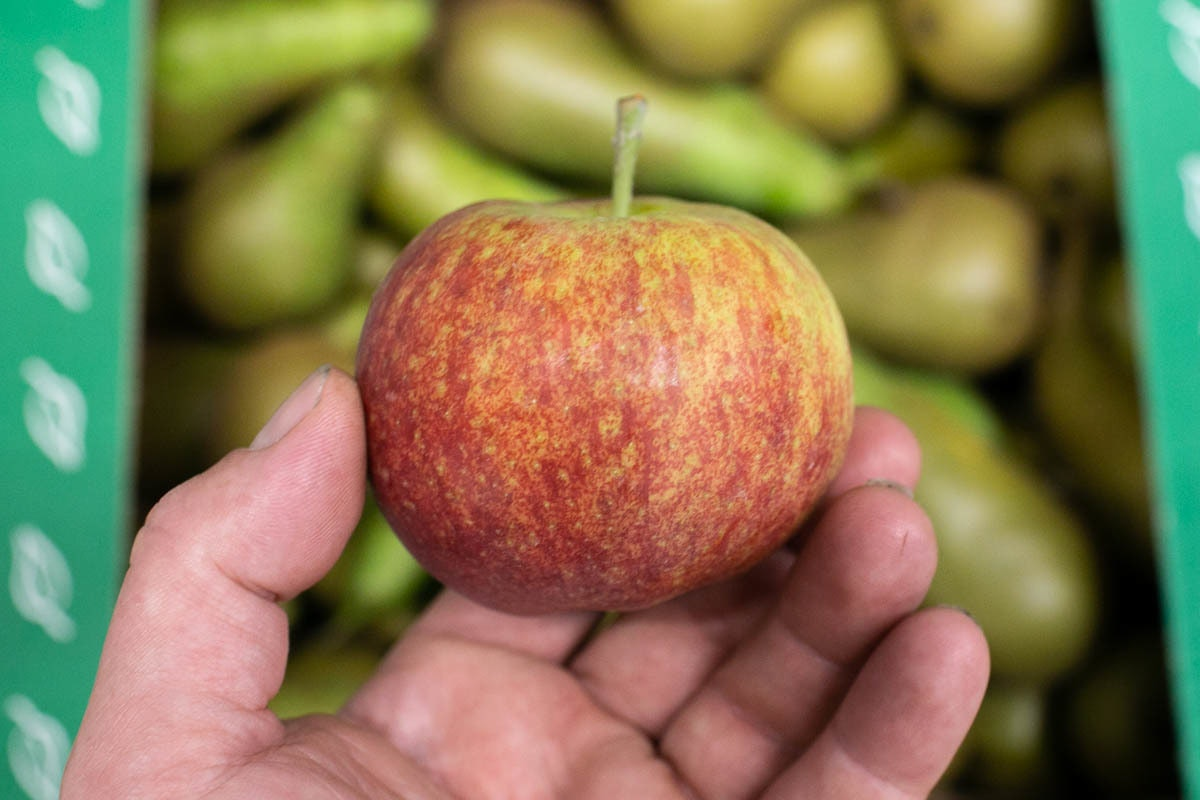 Fruit And Veg Market Report September 2019 Red Robin Apples