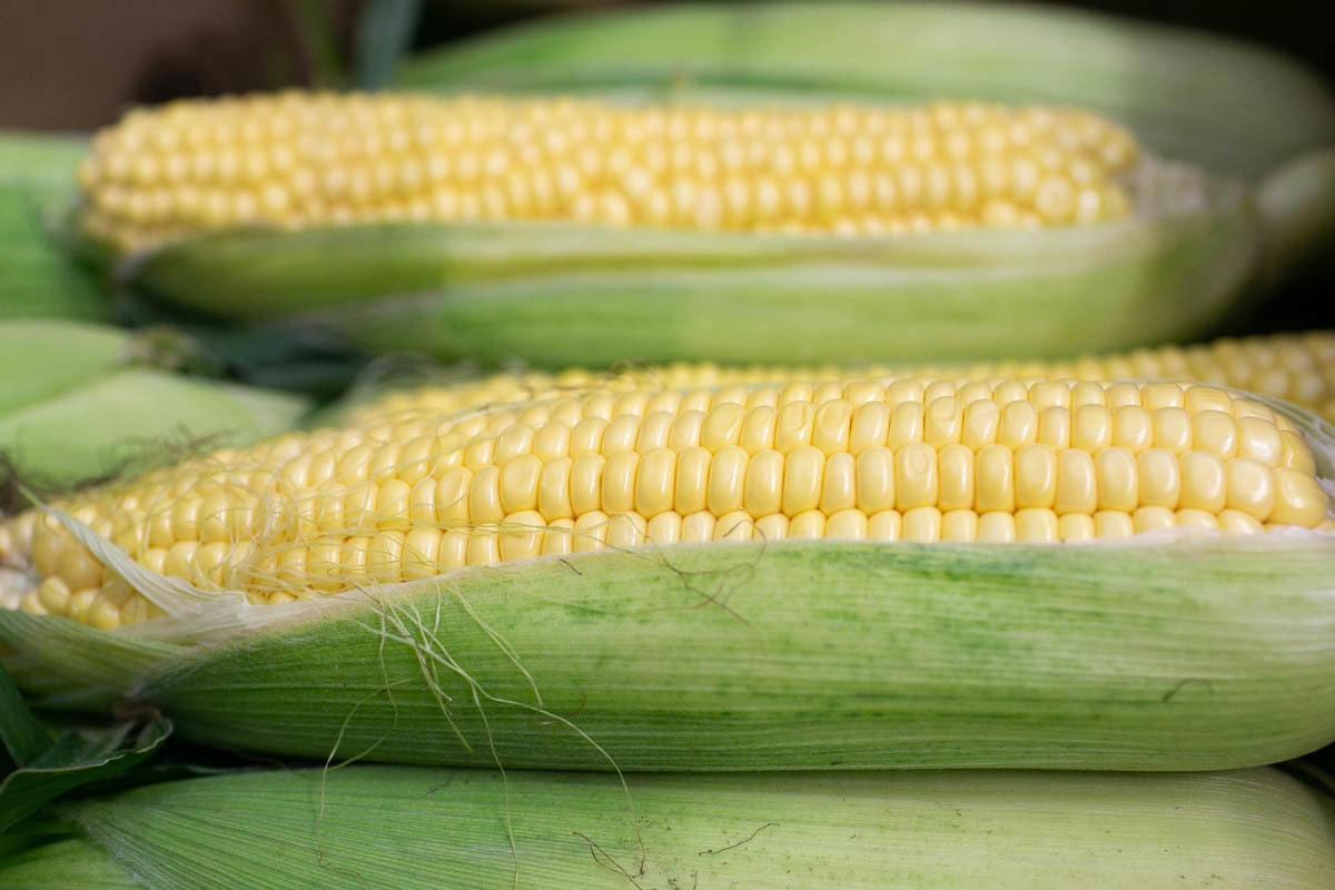 Fruit And Veg Market Report September 2019 Sweetcorn