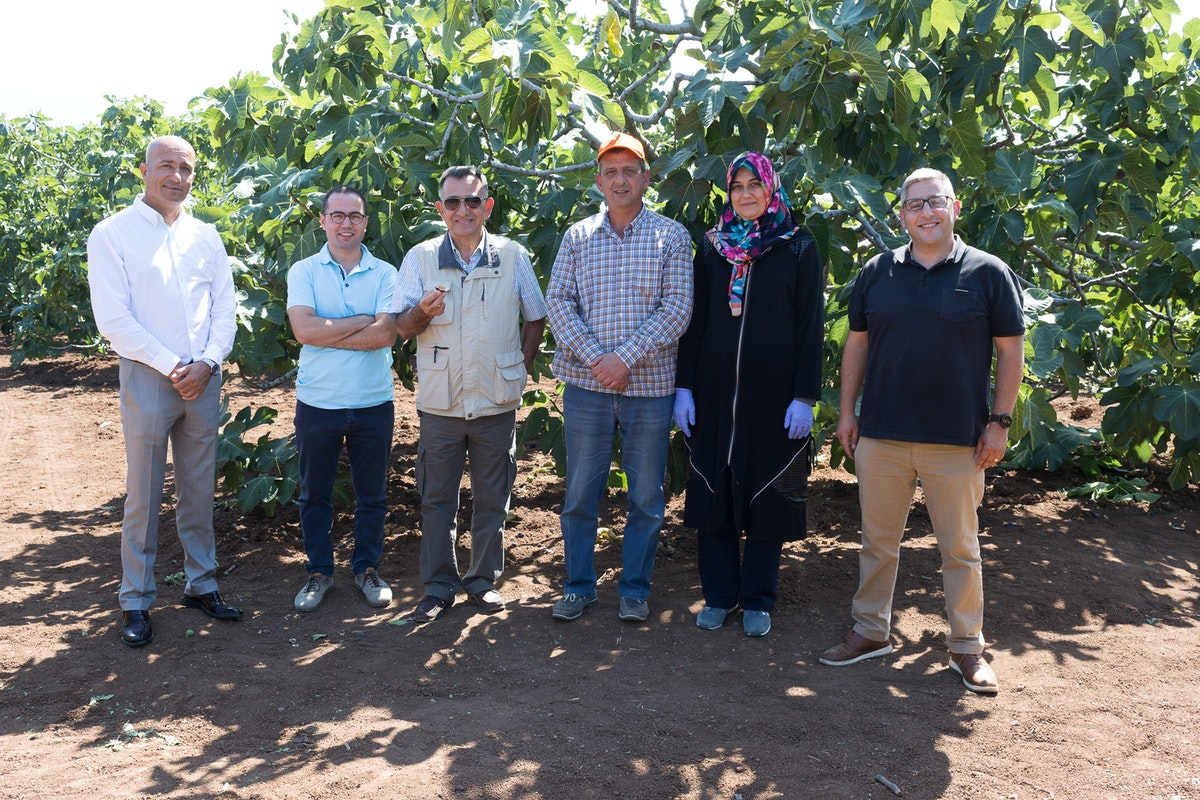 Fruit And Veg Product Profile September 2017 Bursa Black Fig Delegation