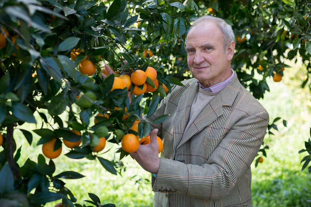 Fruit And Vegetable Market Chefs Guide To Blood Oranges Jan 2019 Rudolf With Tree
