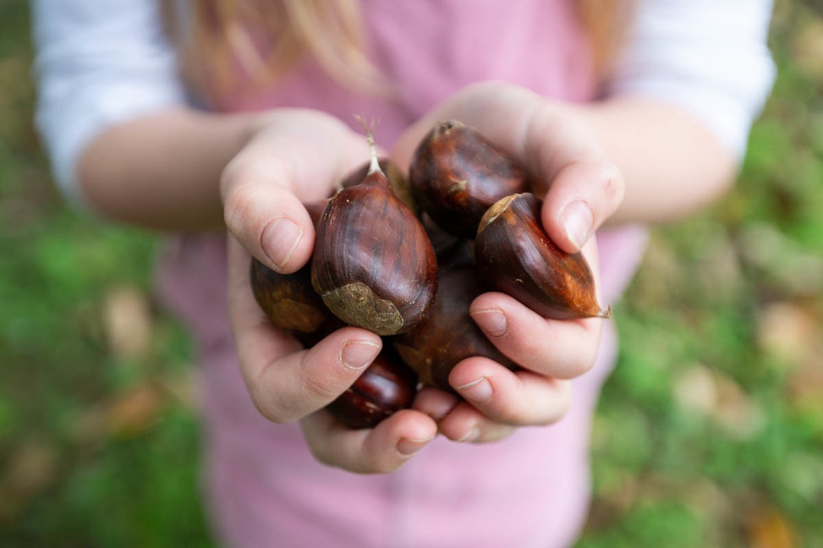 Fruit And Vegetable Market Chefs Guide To Chestnuts Handful